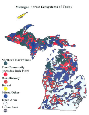 What Types Of Forest Ecosystems Are Found In Michigan